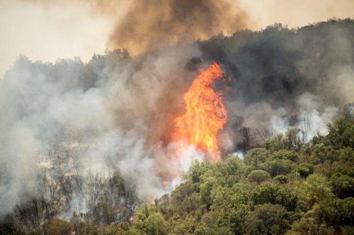 Milhares de hectares de florestas foram destruídos por incêndios no Centro e no Sul do Chile na última semana.